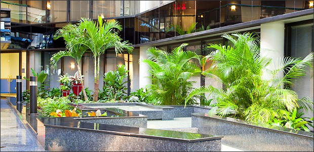 Tropical Interior Landscape