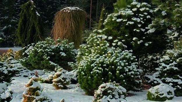 Wonderful Winter Landscaping Tips